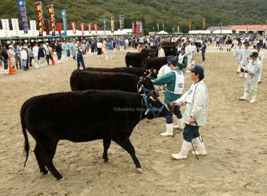 Kobe beef market