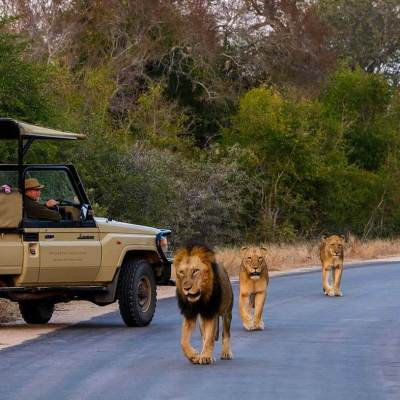 Kruger game drive south africa malaria