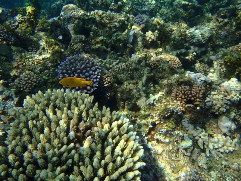 diving-madagascar