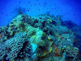 Cozumel diving corals