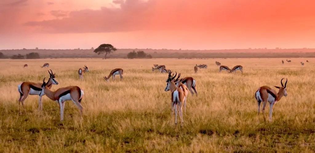 Central Kalahari Game Reserve at sunset