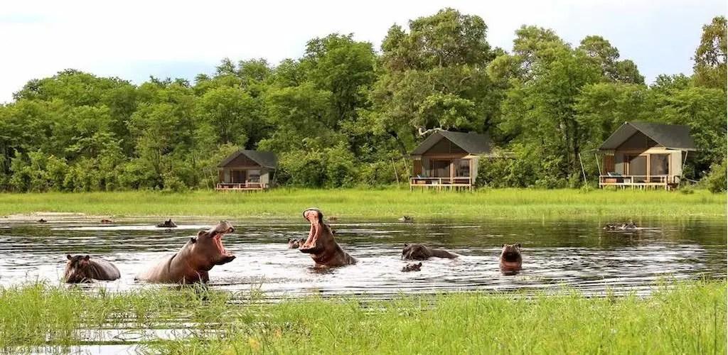 Moremi Game Reserve in the Okavango Delta of Botswana