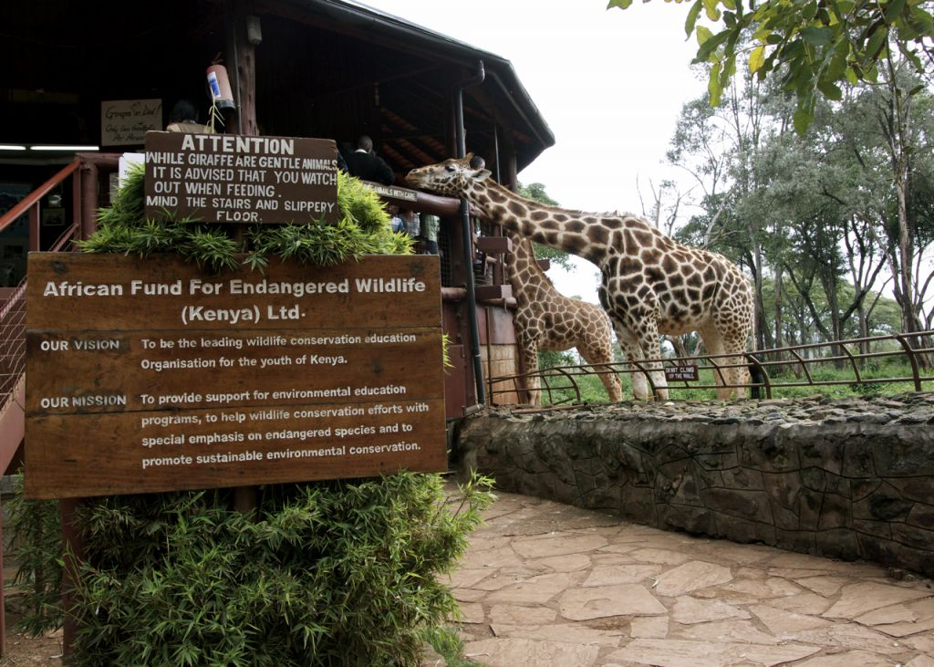 Nairobi Giraffe Center