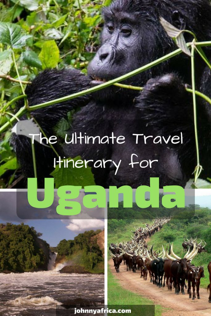 Uganda, a country whose beauty denies description, should be at the top of everyone's bucket lists. Here is my perfect one and two week itinerary for traveling this country including stops in Kampala, Murchison Falls, Lake Bunyonyi, Bwindi Impenetrable forest to trek with the gorillas, and Queen Elizabeth national Park. #uganda #travelitinerary #bwindi #gorillasinthemist #gorillas