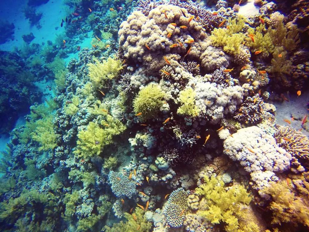 Lighthouse reef egypt dahab diving