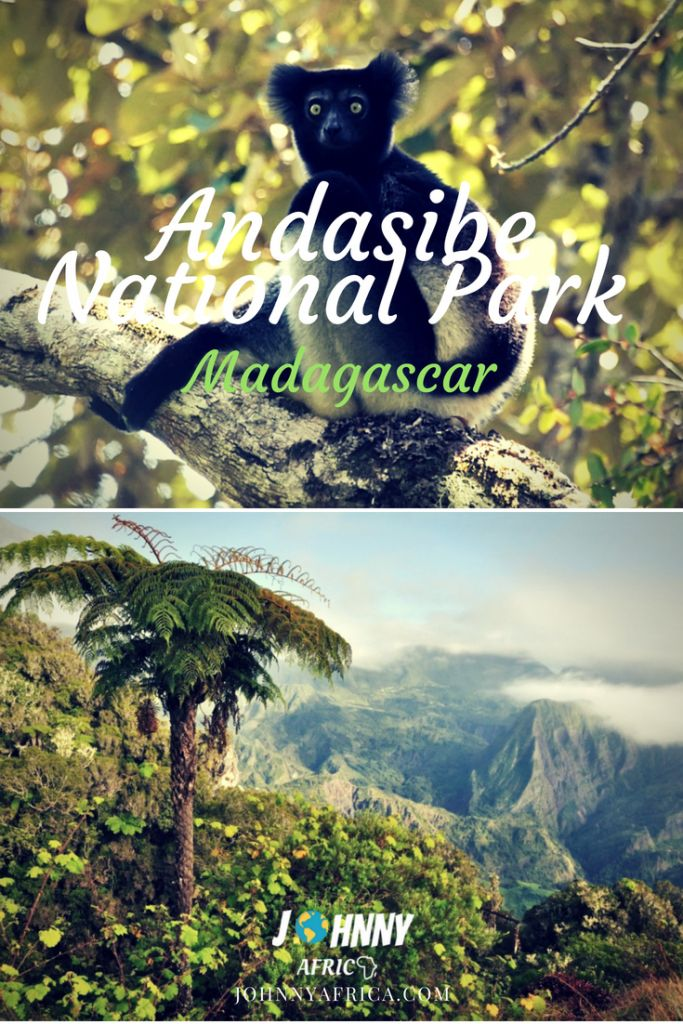 Andasibe is perhaps Madagascar\'s most visited National Park. It is a beautiful natural wonder that is home for the Indri, Madagascar\'s largest lemur\'s species. Standing at 1m, this is twice the size of the next largest lemur and is a sight to behold when visiting! #madagascar #andasibe #lemurs #hiking