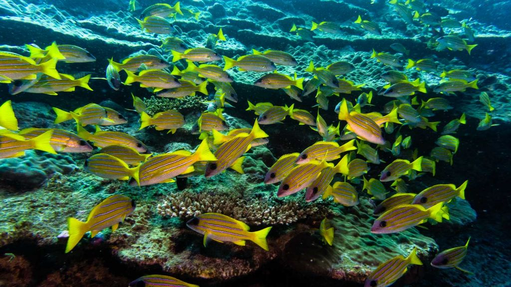 diving park hyatt hadahaa maldives scuba