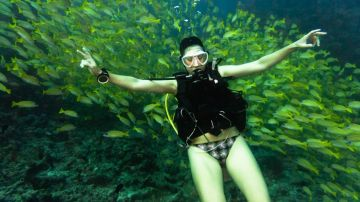 yellow snapper khudarah thila maldives scuba diving