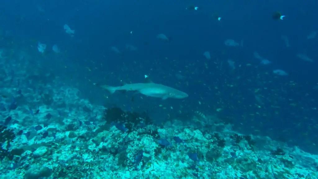 rasdhoo diving