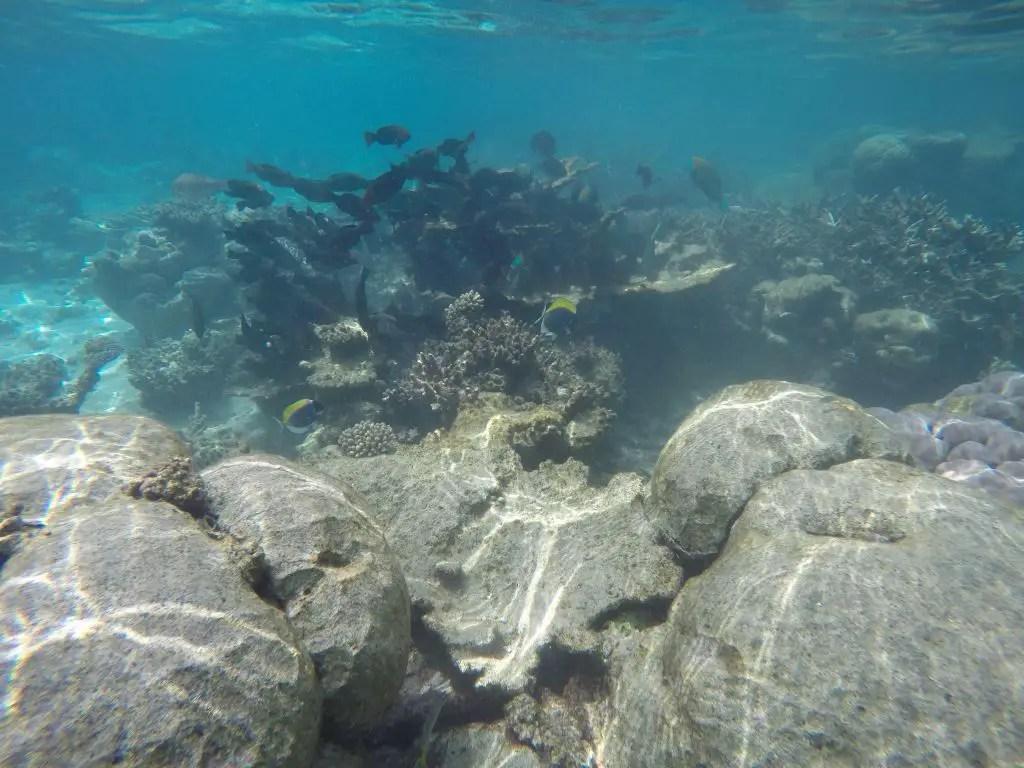 snorkeling park hyatt hadahaa