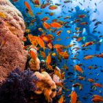 Brothers Island diving egypt scuba liveaboard
