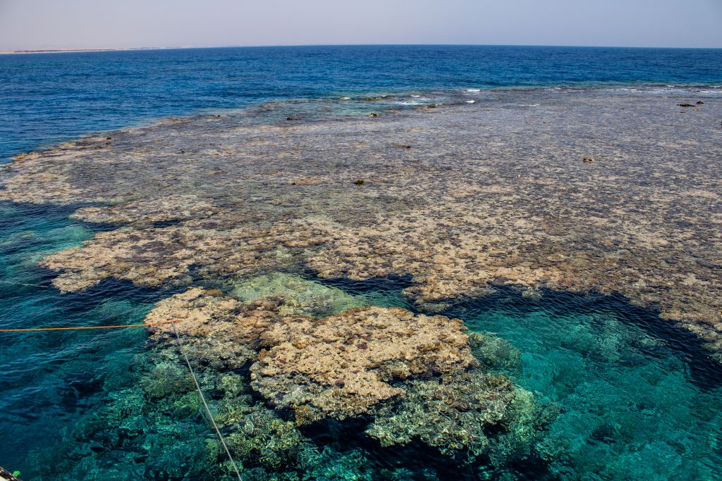 Elphinestone Reef