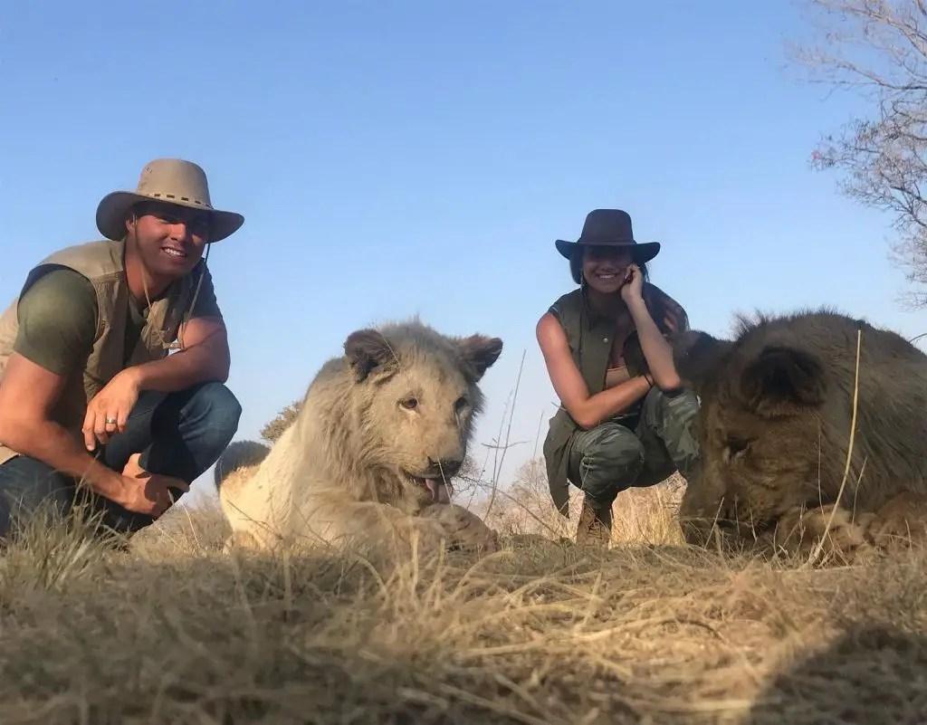 Lion park lion walk