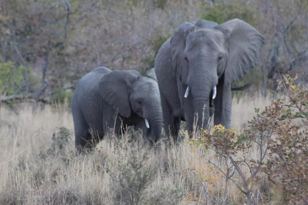 We saw a bunch of elephants too