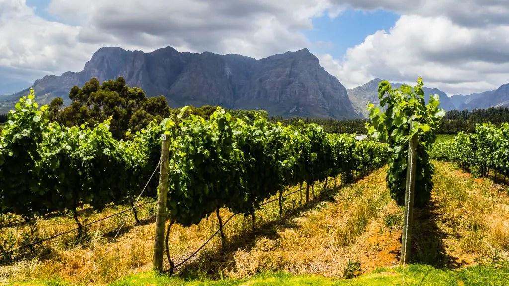Clouds Estate Vineyards