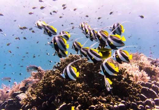 mafia island scuba diving tanzania
