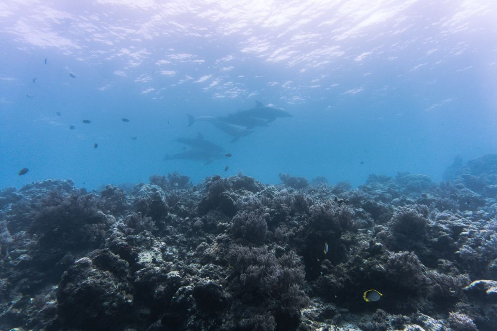 Mnemba Atoll diving scuba