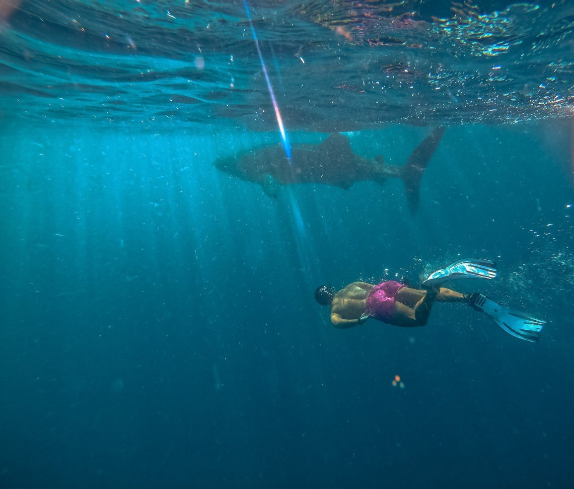 Whale Sharks in mafia Island