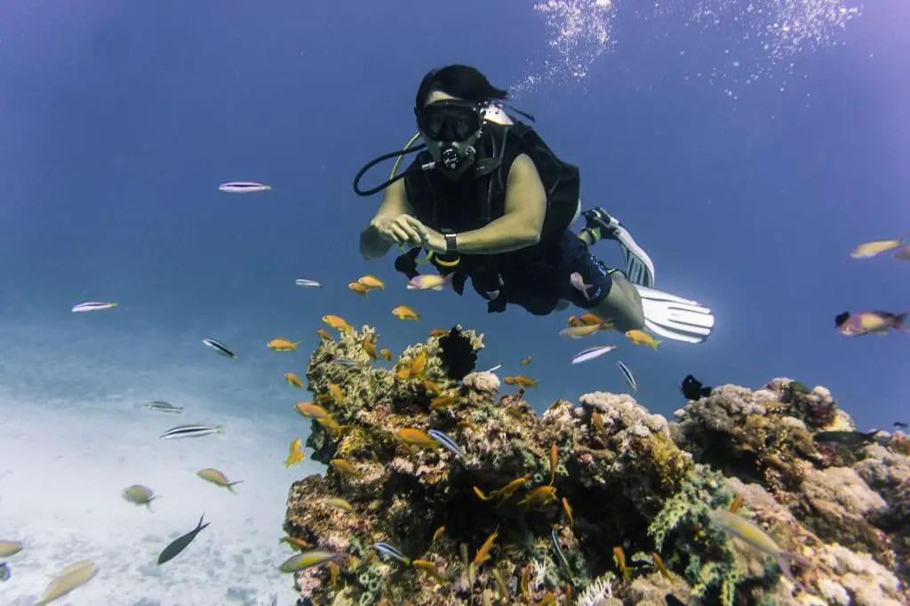 pemba island diving