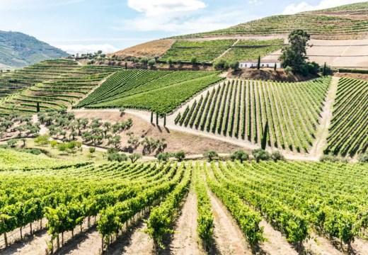Douro Valley POrtugal vineyards