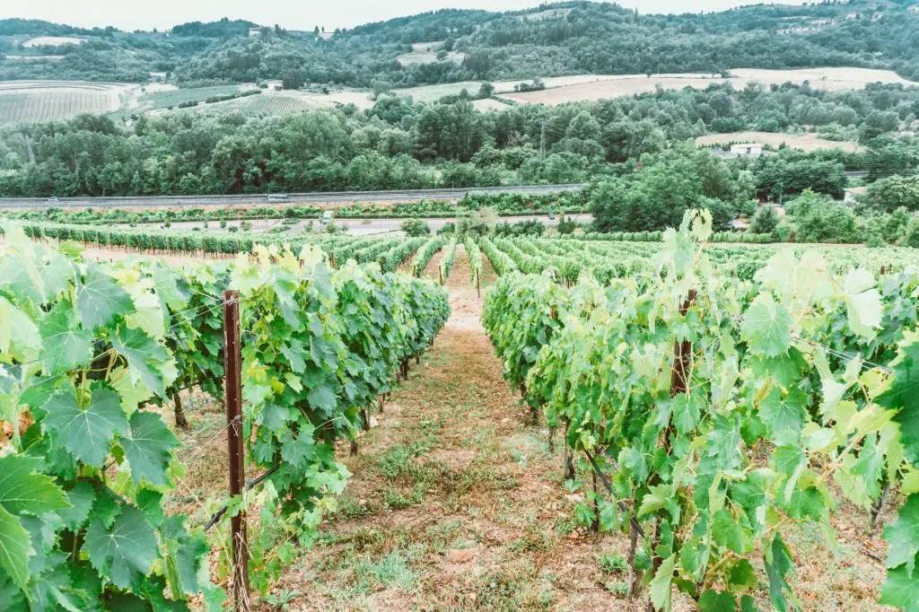 Antinori Winery Chiani Tuscany