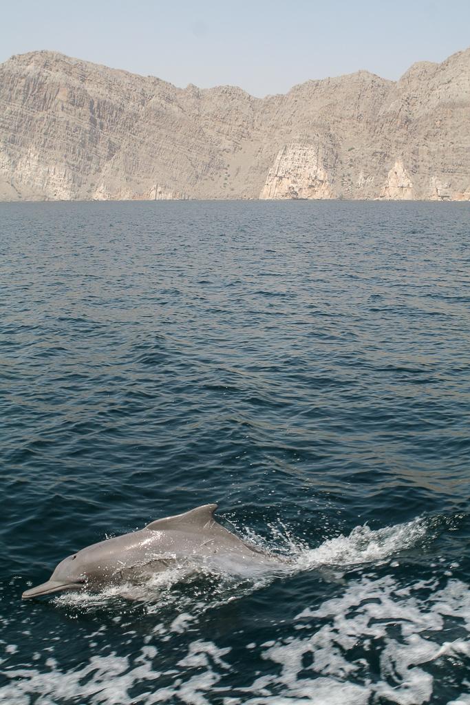 Oman bilder-8