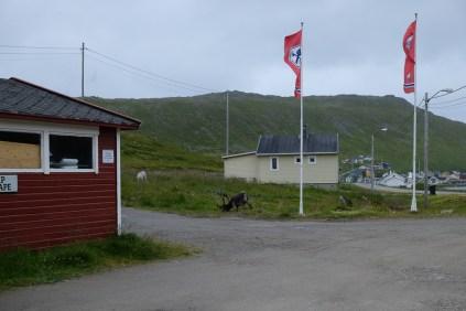 Nordkap_Roadtrip-3714