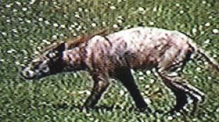 Baltimore creature 01