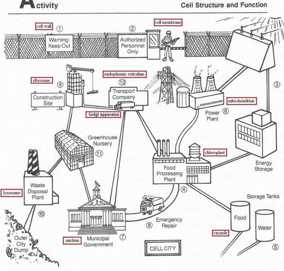 worksheet. Cell City Analogy Worksheet. Worksheet Fun