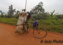 Man Transporting Root Vegetables outside of Entebbe, Uganda