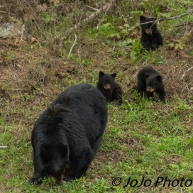 Rosie and her three cubs