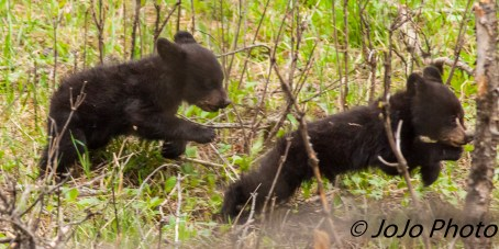 Rosie's two rambunctious cubs