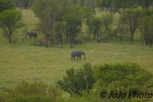 Elephant seen from Hot Air Balloon Ride in Serengeti