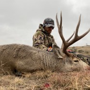 South Dakota guided mule deer hunts