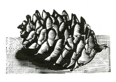 pine cone wood engraving