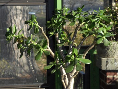 Pruning as an art form--The basics of pruning (1/6)