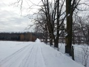 The Farm Driveway - Walnut Trees