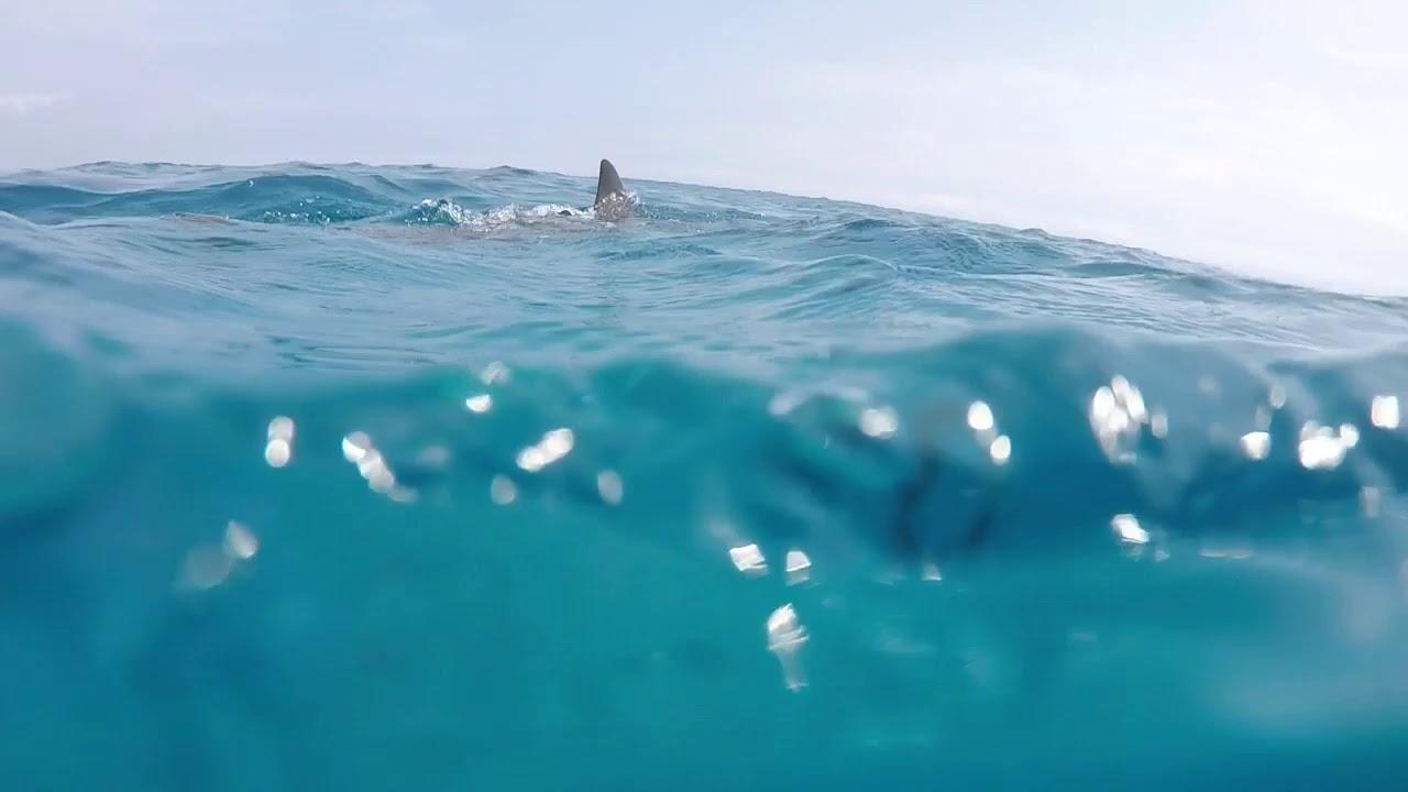ハワイ島チャーターボート #トラベル #旅行 #followme