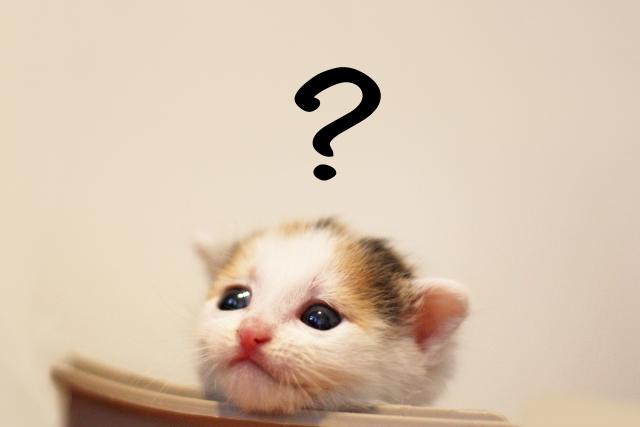 疑問を浮かべる子猫
