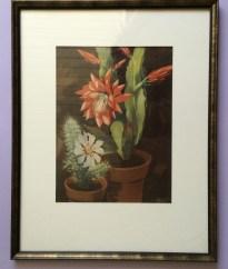 Henk van Gemert zeefdruk,screen print,cacti, cactus, zeefdruk framed