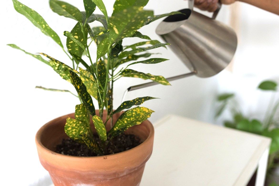 How to Know When to Water Your Houseplants