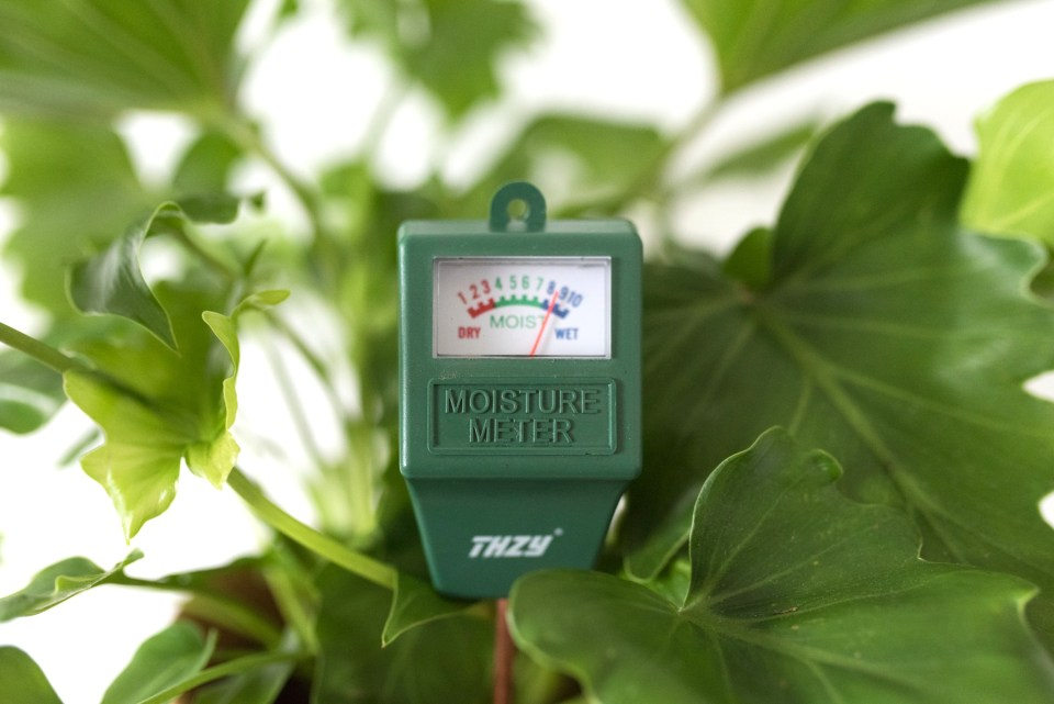 Stop Overwatering Your Houseplants! Why You Should Invest in a Moisture Meter | Joi-Knows-How.com