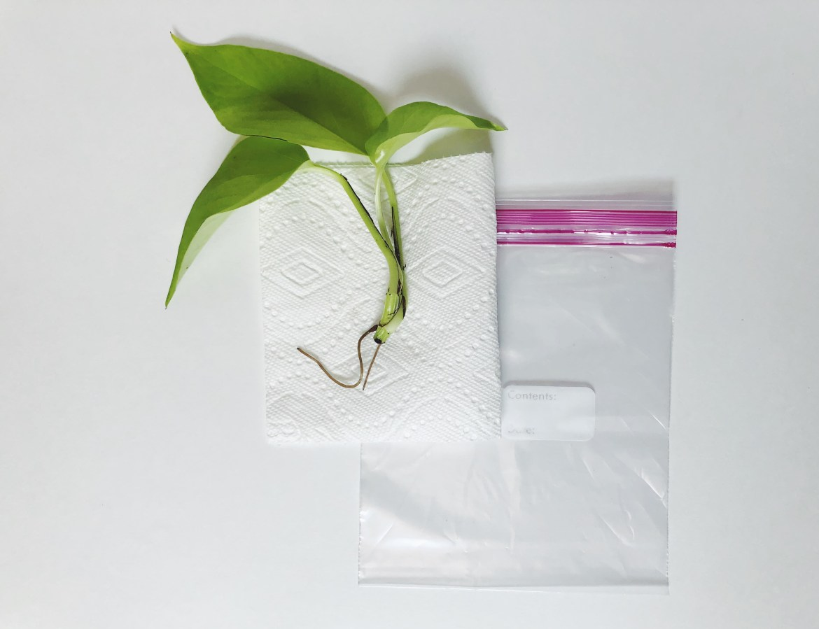 How to Send Plant Clippings in the Mail