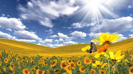 https://i0.wp.com/joieetabondance.com/wp-content/uploads/2014/06/Papillon-soleil-fleurs-changer-de-vie-abondance-joie-nature-bonheur.jpg