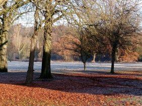 Winter trees in Highbury Park, Kings Heath