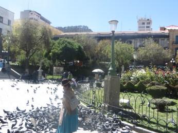 Plaza Murillo pigeons