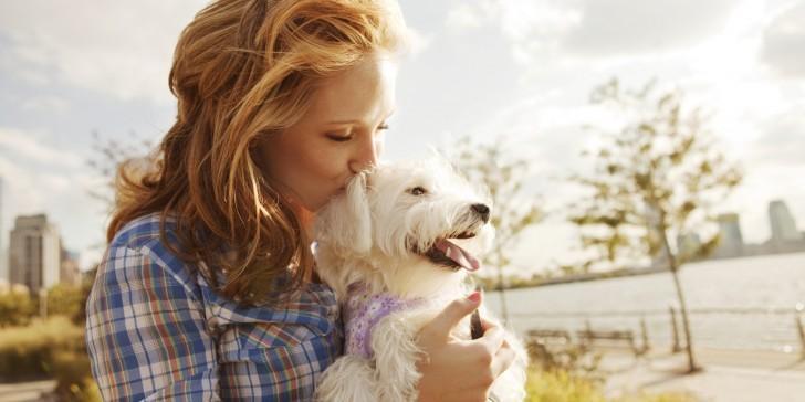 Собаки отражают эмоции людей!