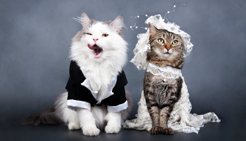 Cats Dress Up Or Pictures That We Love Joint Animal
