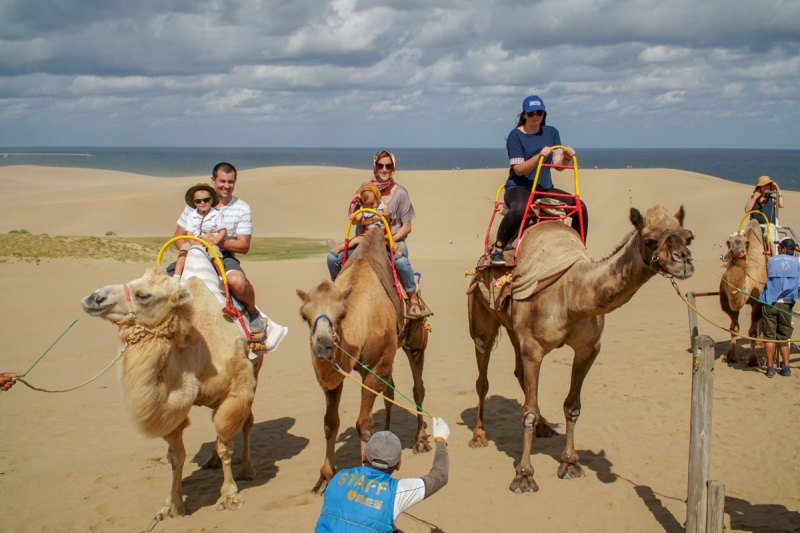 Tottori family camel ride