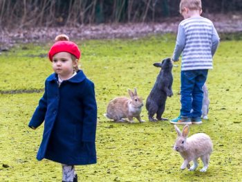 Rabbits-following-girl